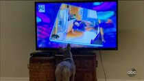 America's Funniest Home Videos - Episode 8 - Safari So Good, Amateur Movers, and People Distracted by Smart...