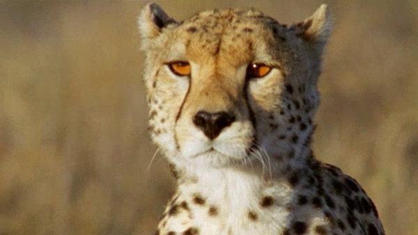 Watch The Life Of Mammals Online - FMoviesWatch.com