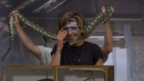 I'm a Celebrity... Get Me Out of Here! - Episode 13 - Saturday Fright at the Movies