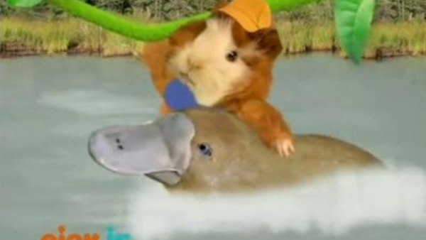 Wonder Pets S2 Ep214 Save the Old White Mouse!The