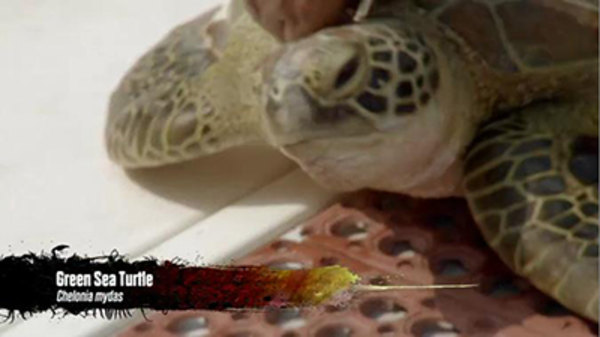 Wild Things with Dominic Monaghan - S03E12 - Paradise in Palau