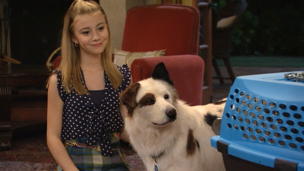 Full Episodes Of Dog With A Blog Stan Has Puppies