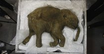 Futurism - Episode 292 - Biologists Plan to Bring the Woolly Mammoth  Back to Life by...