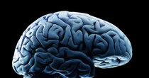 "Futurism - Episode 913 - A Network Of ""Mini Brains"" May Be Responsible for Your Pain"