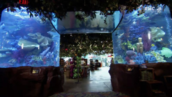 Fish Tank Kings Season 1 Episode 1