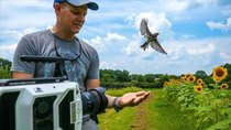 Smarter Every Day - Episode 197 - Bird Taking Off at 20,000 fps (213 milliseconds)
