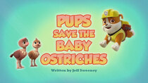 Paw Patrol - Episode 12 - Pups Save the Baby Ostriches