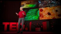 TED Talks - Episode 127 - Roger Hanlon: The amazing brains and morphing skin of octopuses...