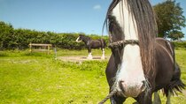 The Farmers' Country Showdown - Episode 3 - South Wales - Shire Horses