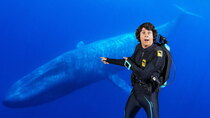Andy's Aquatic Adventures - Episode 1 - Andy and the Blue Whale