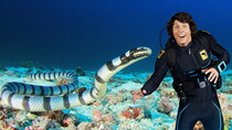 Andy's Aquatic Adventures - Episode 2 - Andy and the Sea Kraits