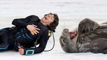 Andy's Aquatic Adventures - Episode 10 - Andy and the Weddell Seals