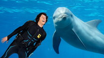 Andy's Aquatic Adventures - Episode 11 - Andy and the Bottlenose Dolphins