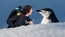 Andy's Aquatic Adventures - Episode 13 - Andy and the Chinstrap Penguins