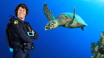 Andy's Aquatic Adventures - Episode 15 - Andy and the Hawksbill Turtles