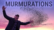 Smarter Every Day - Episode 234 - How Flocking Birds Make Amazing Murmurations (Boids Algorithm)