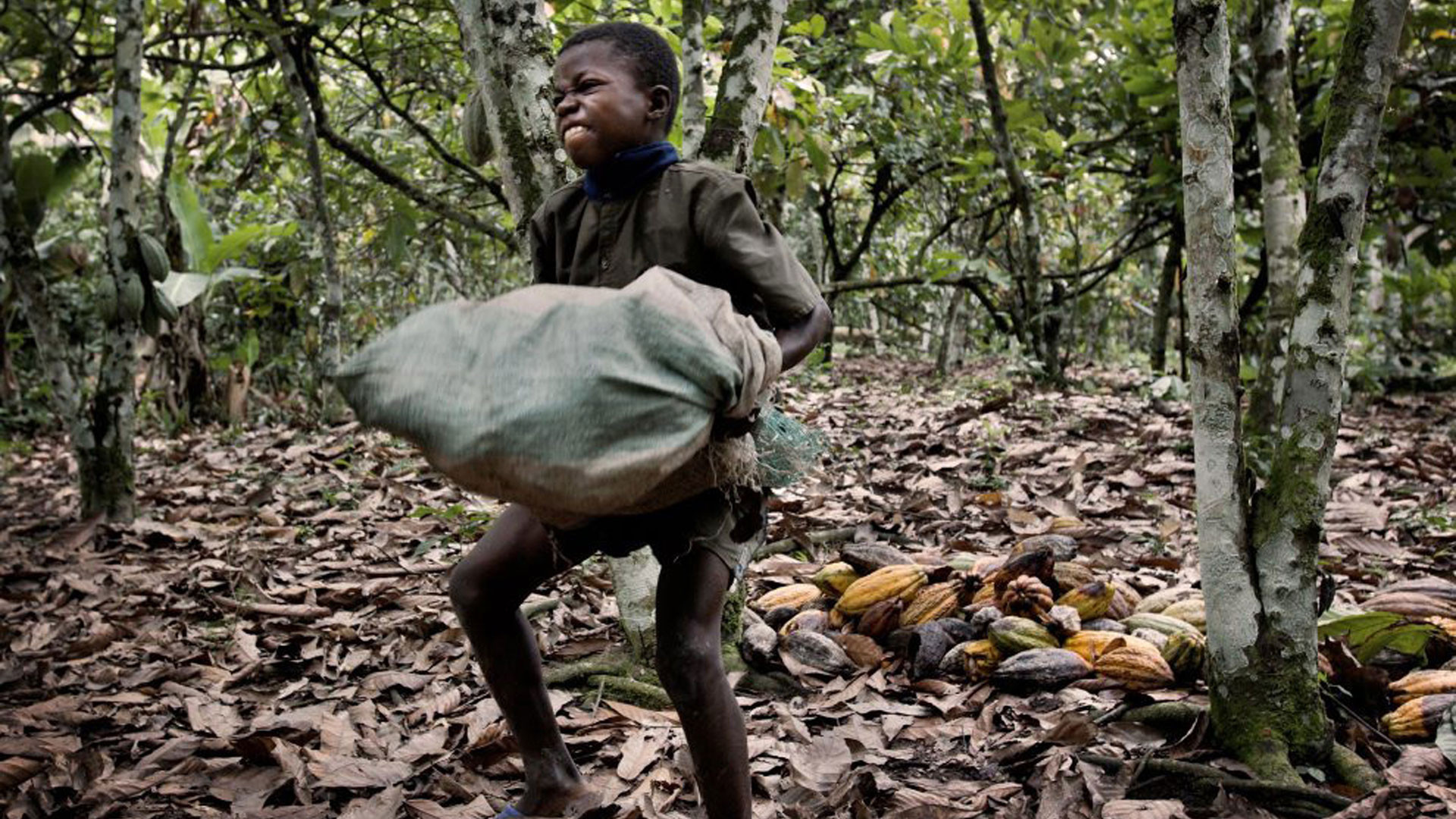 slavery of ivory cost Find out how many slaves work for you  there are estimated 200,000 child slaves working in ivory coast alone  slavery footprint.