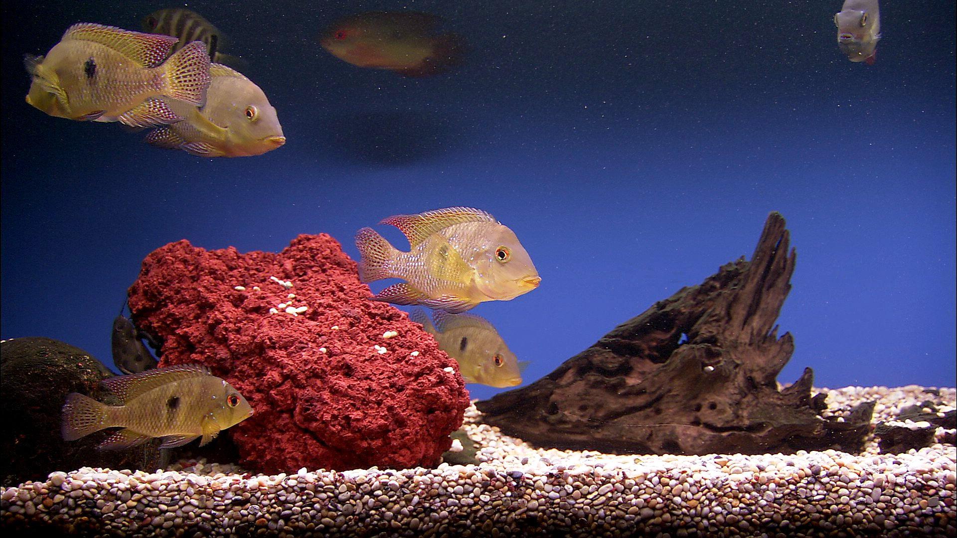 Картинки живые на рабочий стол с рыбками