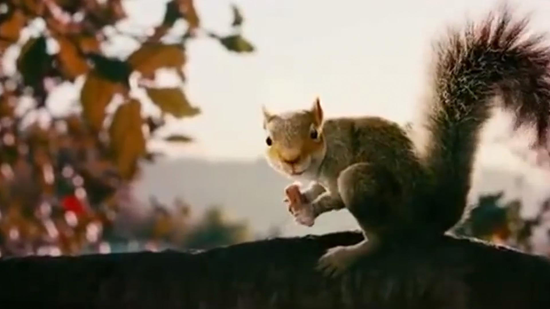 Movie up squirrel trailer