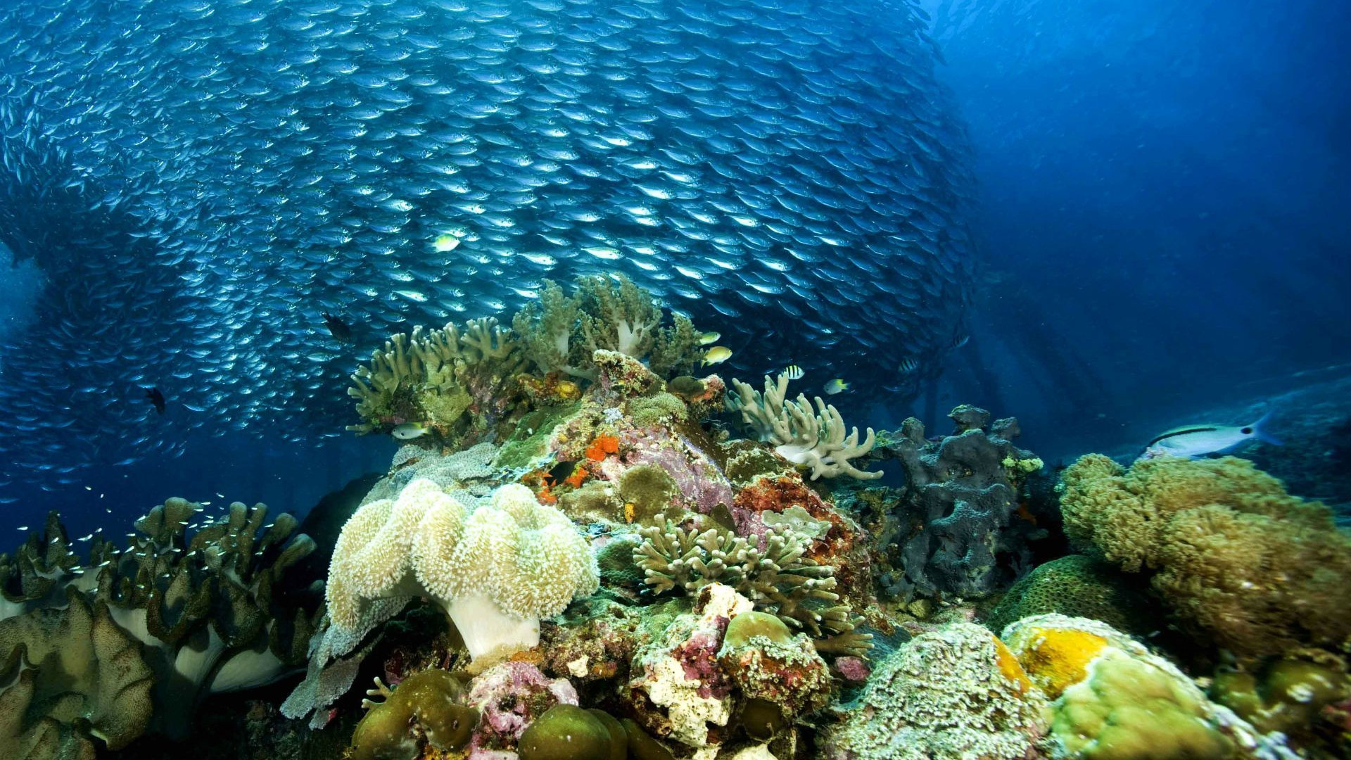 в море в океане фото