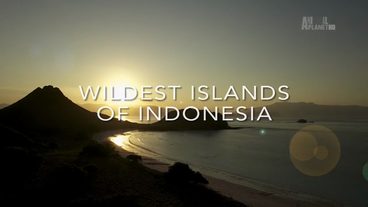 Wildest Islands of Indonesia  Series 1  Episode 2 of 5 Islands of the Monsoon