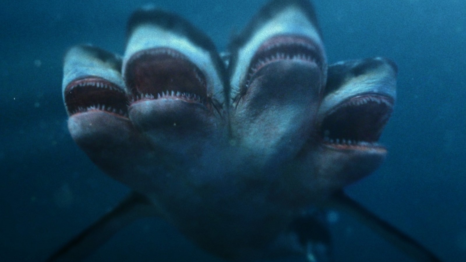 Three headed shark