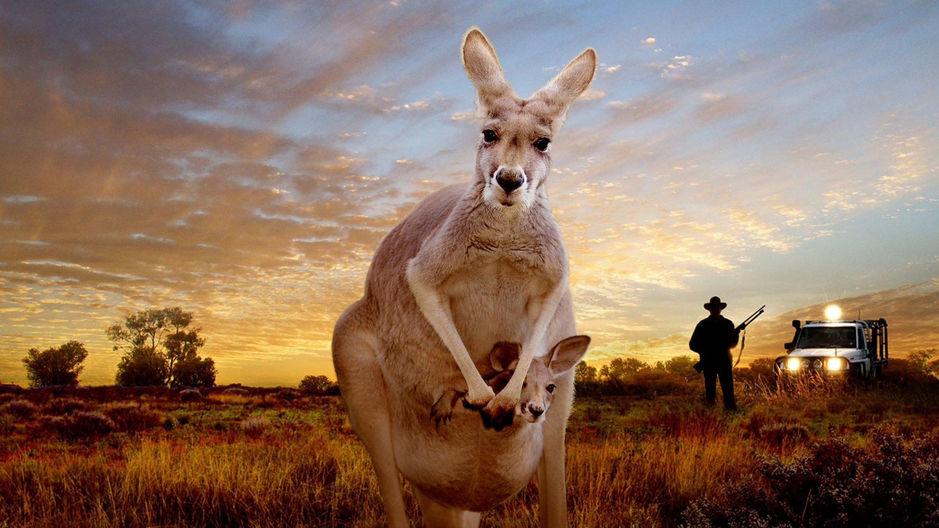смешные картинки кенгуру любила, доверяла