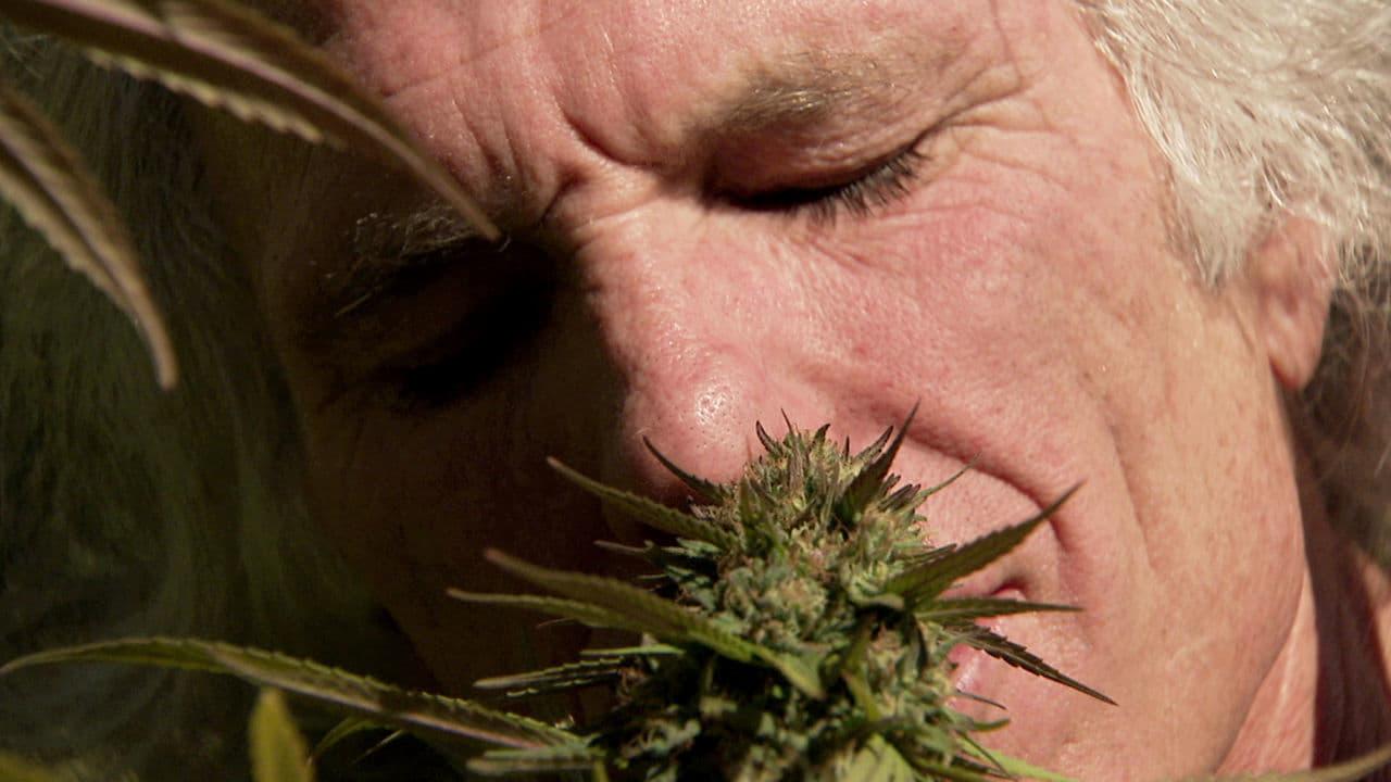 Фильмы марихуану и подростков технические виды конопли