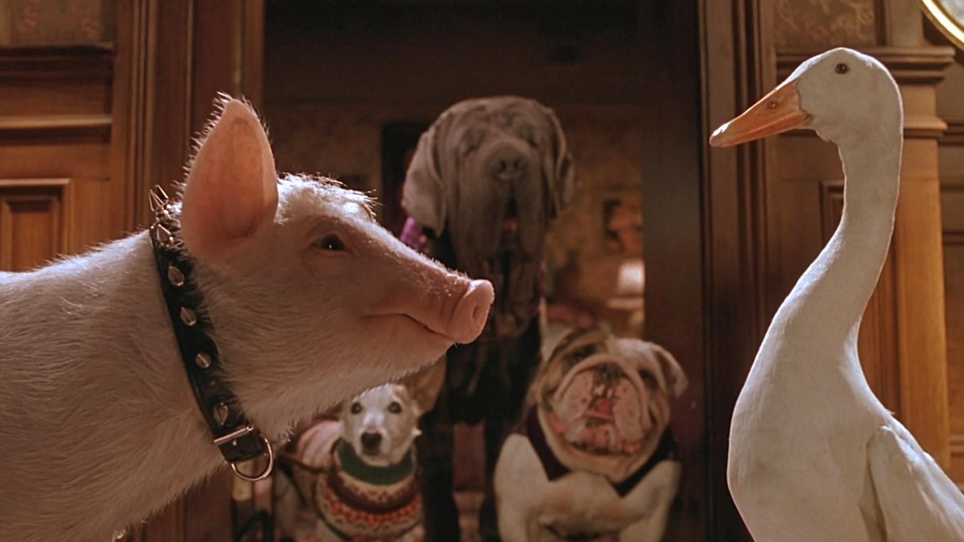 фото гуся и собаки мультяшки