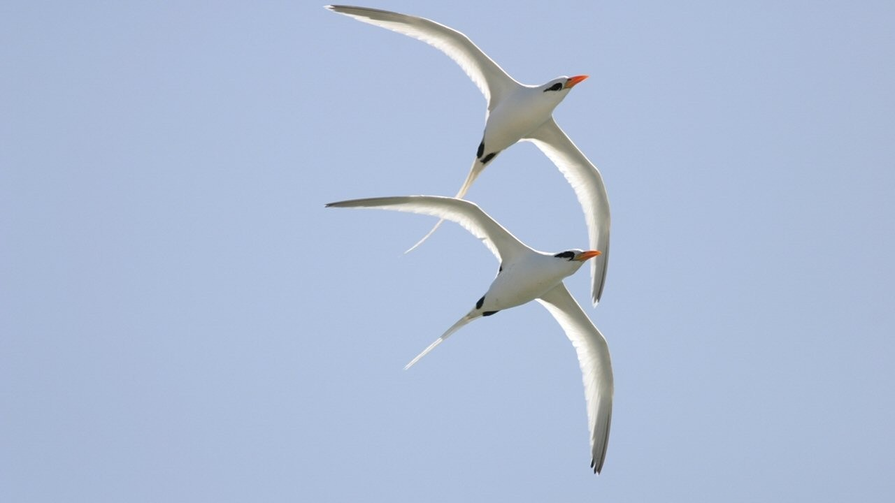 a comparison of winged migration by jaques perrin and white wilderness by james algar