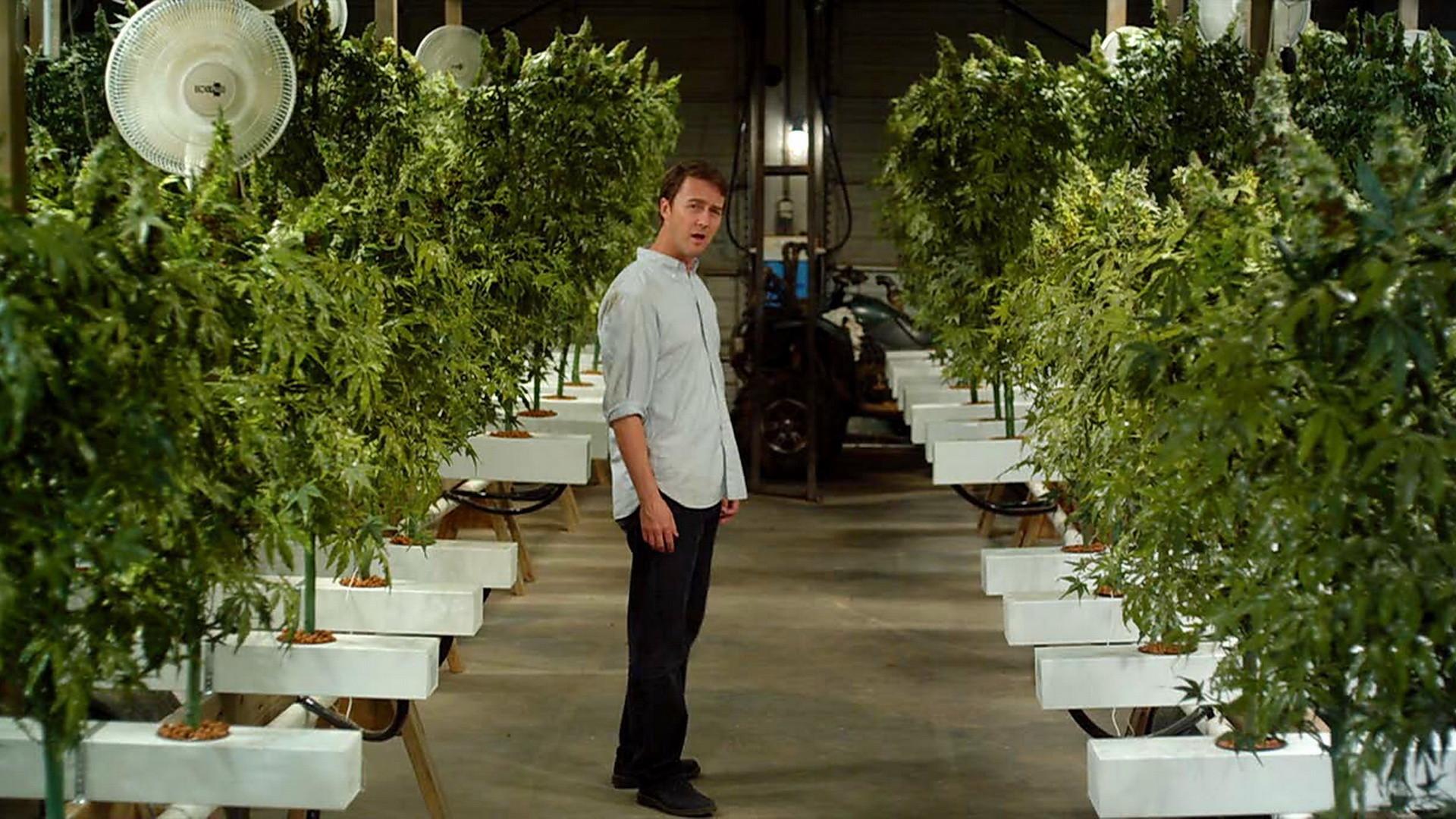 Кино марихуана как выращивать марихуану в открытом грунте