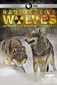 Radioactive Wolves: Chernobyl's Nuclear Wilderness