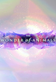The Wonder of Animals