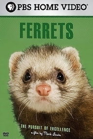 Ferrets: The Pursuit of Excellence