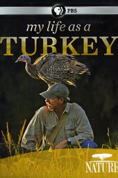 My Life as a Turkey
