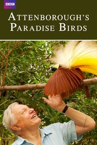 Attenborough's Paradise Birds