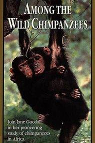 Among the Wild Chimpanzees