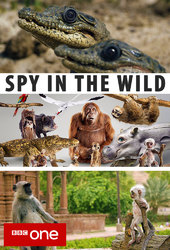 Spy in the Wild