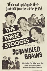 Scrambled Brains