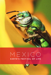 Mexico: Earth's Festival of Life