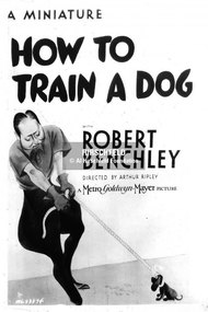 How to Train a Dog