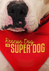 Rescue Dog to Super Dog (US)