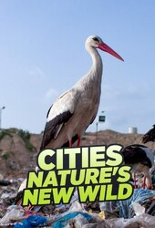 Cities: Nature's New Wild