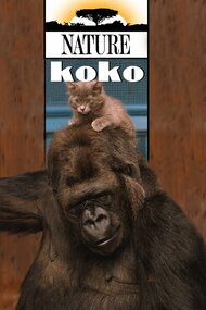 A Conversation with Koko the Gorilla