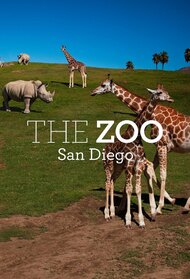 The Zoo: San Diego
