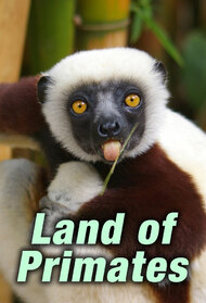 Land of Primates