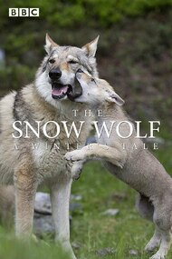 The Snow Wolf: A Winter's Tale